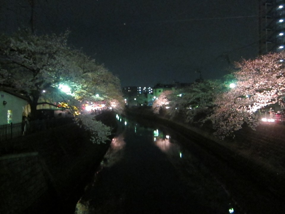 The beautiful yozakura near Gumyoji station