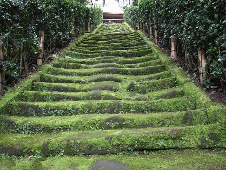 A Historical Kamakura Stairway