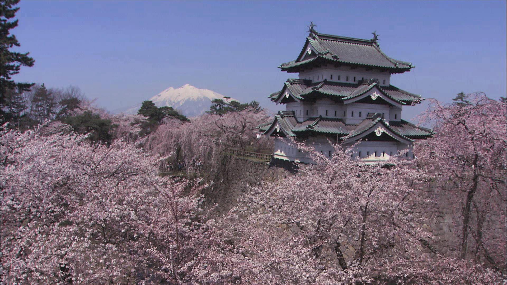 Hirosaki Aomori For Beautiful Cherry Blossoms In Japan Deepjapan