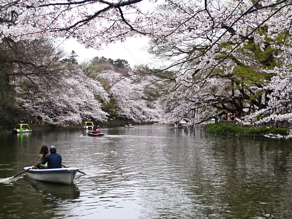 Inokashira Park Hanami